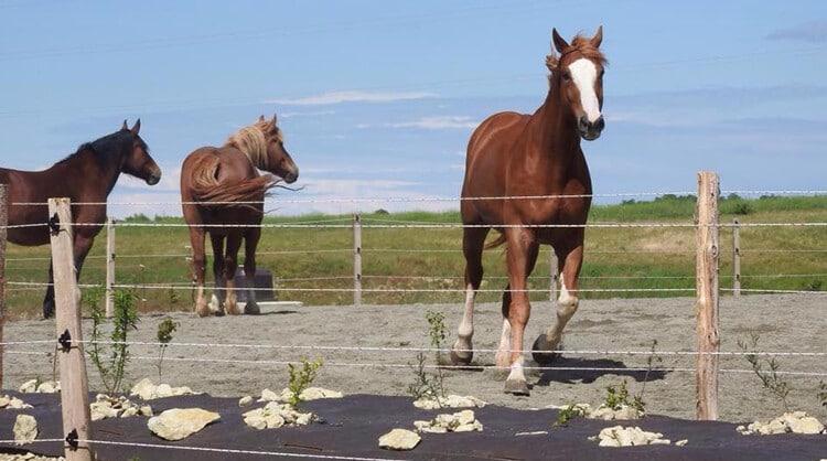 clôture chevaux pour leur bien-être