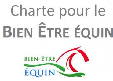 L'écurie active, un concept en parfait accord avec la charte nationale pour le bien-être équin