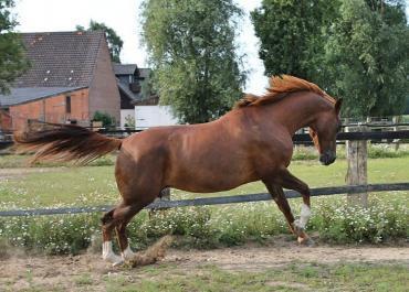 Confort du cheval : 6 solutions-clés pour l'améliorer