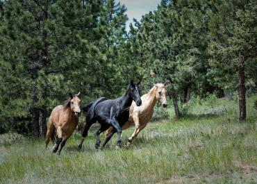 Ecurie active : le concept qui révèle la vraie nature du cheval