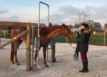 Le paradoxe de l'écurie active : la liberté du cheval favorise sa domestication