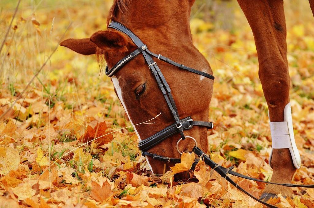 alimentation chevaux les 10 règles