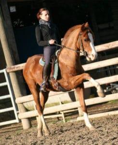 Dressage cheval carrière