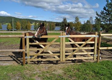 Barrière chevaux : quelle barrière pour quels besoins ?