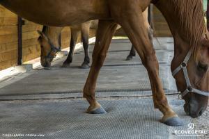 dalle ou tapis caoutchouc chevaux