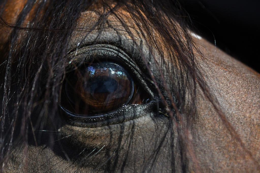 Carrière cheval : quand il la voit