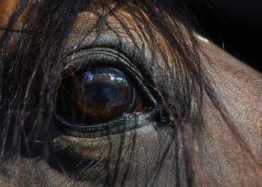 La carrière vue du cheval : la vôtre a-t-elle ce qu'il faut ?