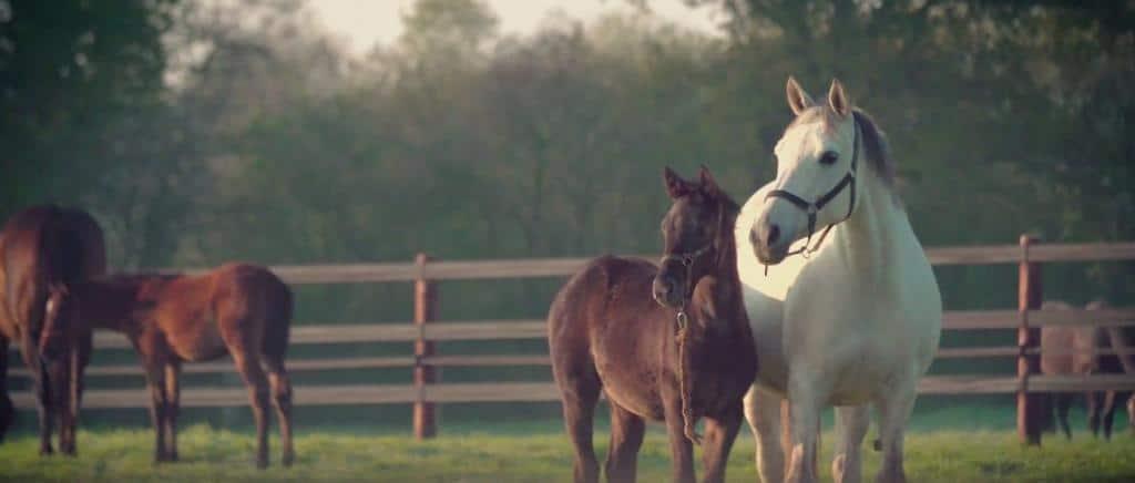 Barrière cheval clôture cheval acier galvanisé
