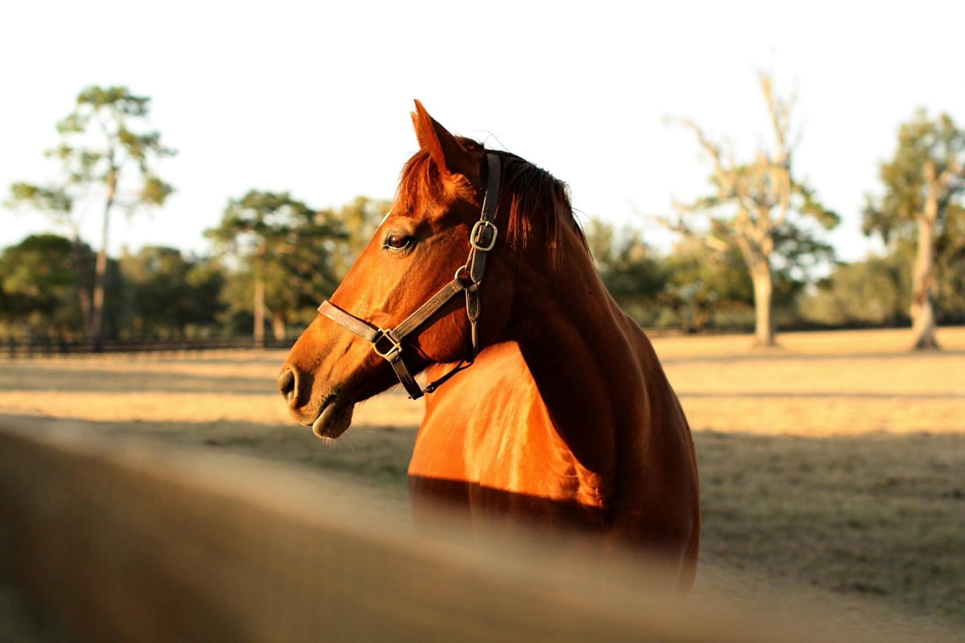 Clôture chevaux quelle perception