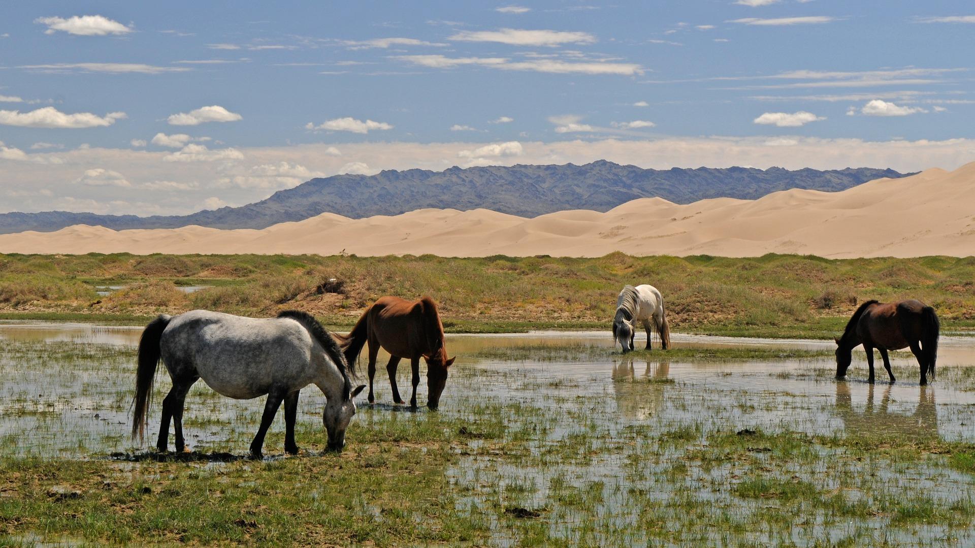 chevaux : à l'état naturel voici leurs abreuvoirs