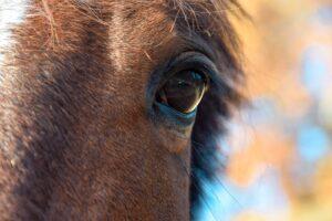 évaluer le bien-être du cheval